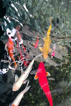 fish_i0501_l