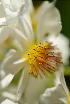 Blooming_5402_M