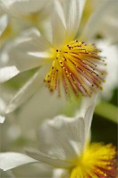 Blooming_5403_M