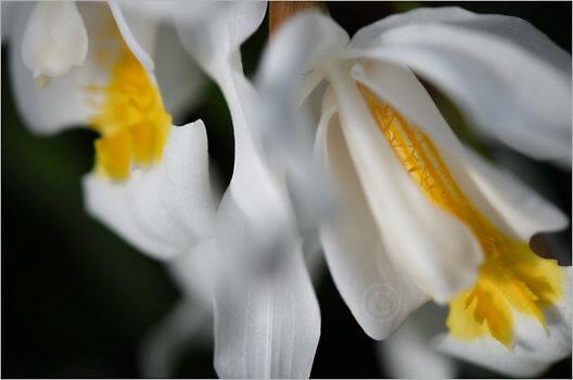 Blooming_5416_M