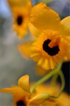 Blooming_5428_M