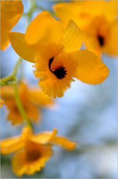 Blooming_5434_M