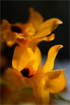 Blooming_5443_M