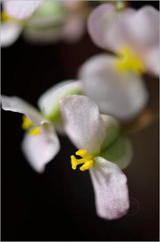 Blooming_5458_M