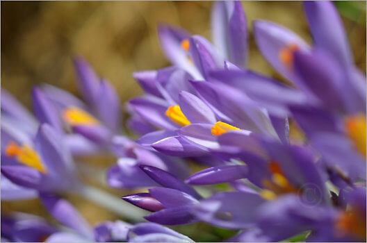 Blooming_5472_M