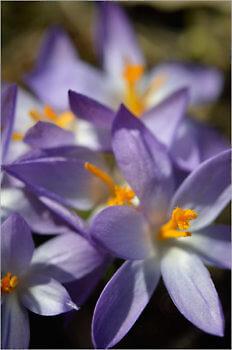 Blooming_5479_M
