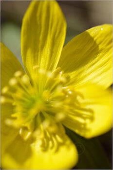 Blooming_5495_M