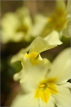 Blooming_5728_M