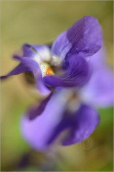 Blooming_5737_M