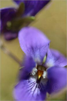 Blooming_5741_M