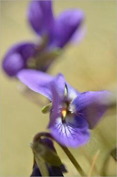 Blooming_5742_M