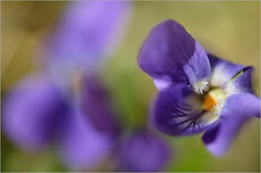 Blooming_5743_M