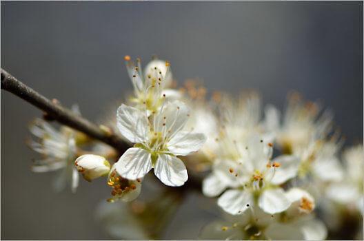 Blooming_6591_M
