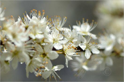 Blooming_6600_M