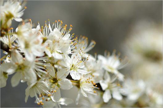 Blooming_6601_M