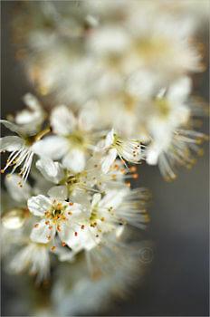 Blooming_6602_M