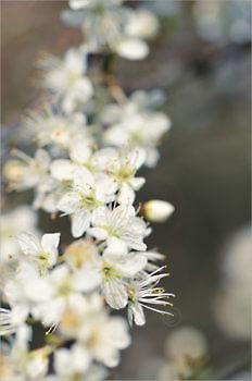 Blooming_6606_M