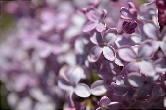 Blooming_6723_M
