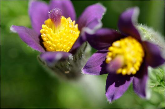 Blooming_6730_M