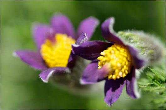 Blooming_6732_M