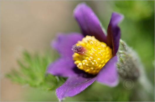 Blooming_6733_M