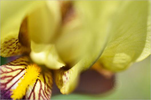 Blooming_6752_M