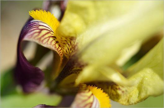 Blooming_6755_M