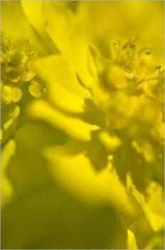 Blooming_6771_M