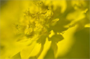Blooming_6772_M   Rica Belna Artwork
