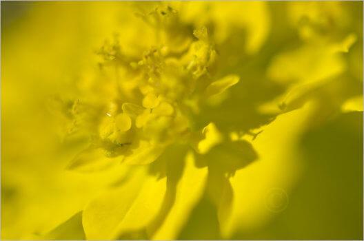 Blooming_6772_M