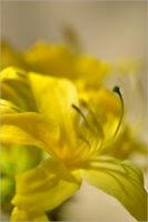 Blooming_6778_M   Rica Belna Artwork