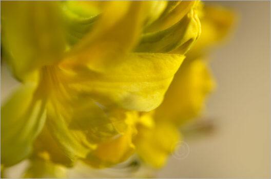 Blooming_6779_M