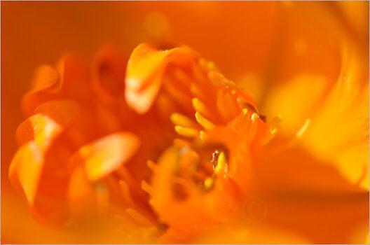 Blooming_6785_M