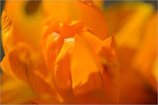 Blooming_6787_M