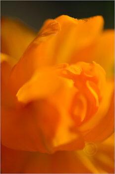 Blooming_6788_M