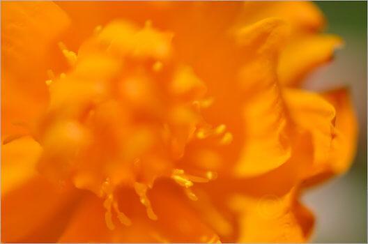 Blooming_6790_M