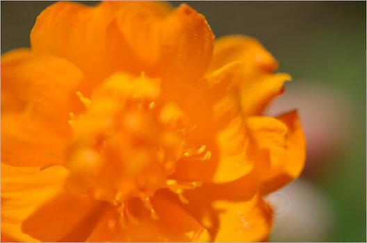 Blooming_6791_M