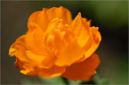 Blooming_6794_M