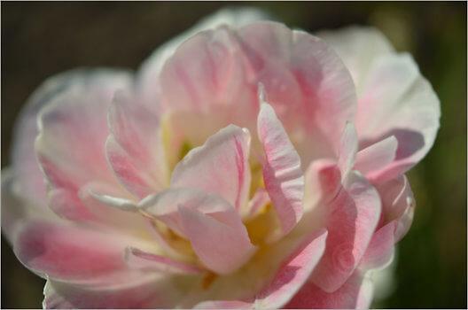 Blooming_6804_M