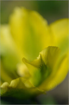 Blooming_6815_M