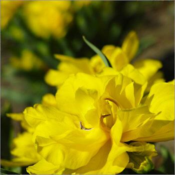 Blooming_6N8033_M