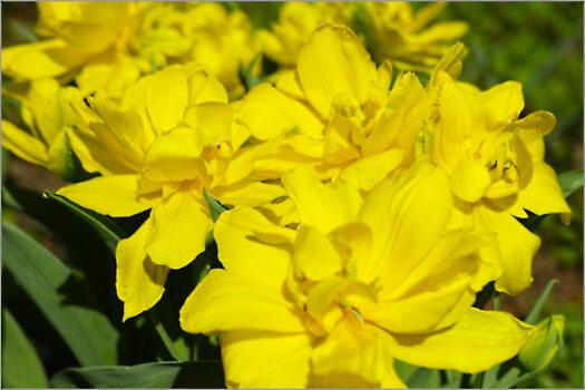 Blooming_6N8036_M