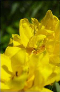 Blooming_6N8039_M