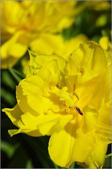 Blooming_6N8041_M