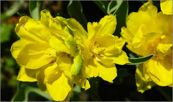 Blooming_6N8044_M