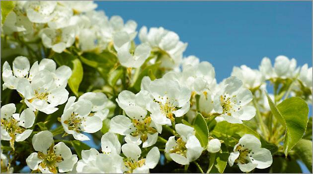 Blooming_6N8058_M