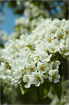 Blooming_6N8063_M