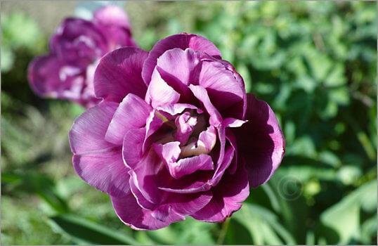 Blooming_6N8082_M