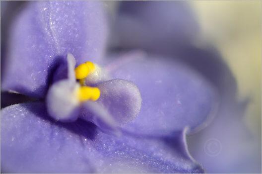 Blooming_7082_M