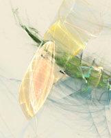 Colortrails_22286_L | Rica Belna Artwork